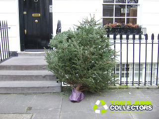 Christmas Tree Collection London