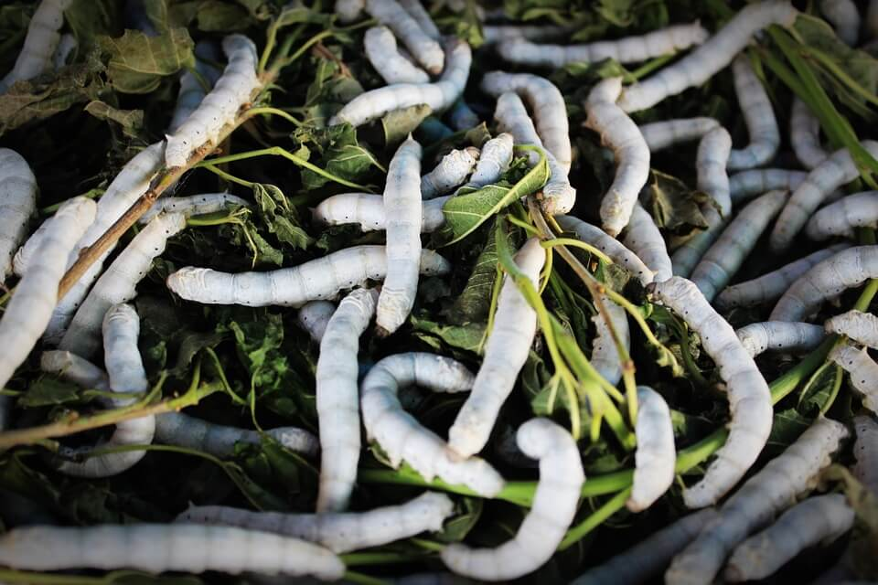White maggots crawling in green waste