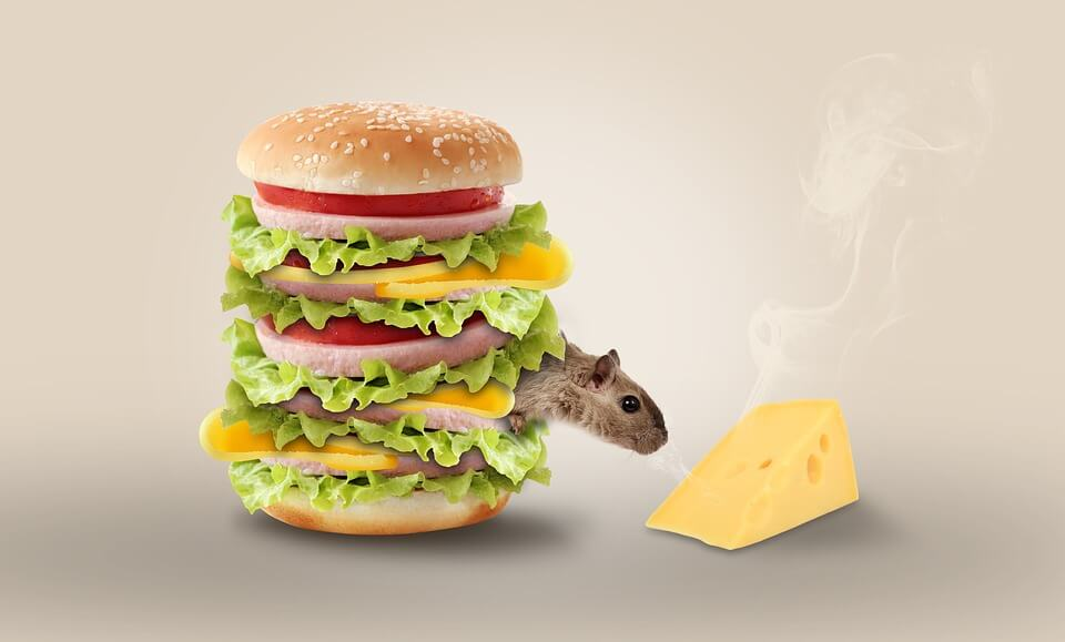 Rodent in a burger, reaching for a piece of chease